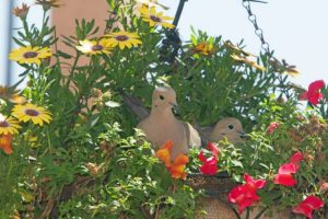 How to stop birds from nesting in flower pots