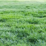 Why Is My Lawn Squishy? All You Need To Know!