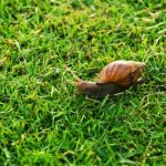 Why Are The Garden Snails Burying Themselves?