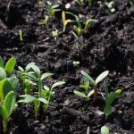 Why Are My Seedlings Growing So Slow? [8 Causes With Solutions]