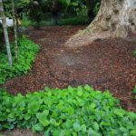 How To Make A Mulch Bed? - 10 Simple Steps