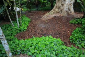 how to create a Mulch Bed