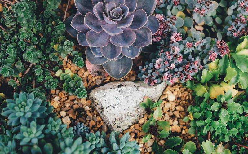 Where to buy succulents in bulk