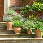 Why Do Terracotta Pots Get Wet? – 5 Reasons
