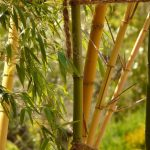 Why Is My Garden Bamboo Dying? - 7 Reasons