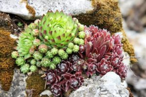 Causes Of Red Spots On Succulent Leaves