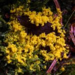 5 Top Causes Of Yellow Mold In Houseplant Soil