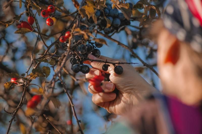 Berries are good fruit trees for alkaline soil