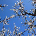 Best 5 Fruit Trees For Alkaline Soil
