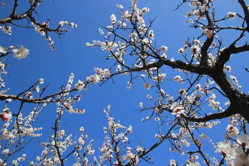 Best fruit trees for alkaline soil