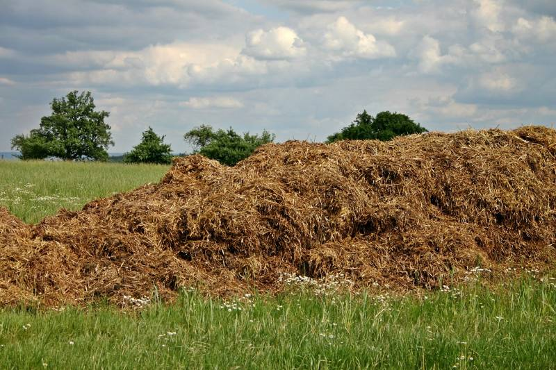 Best time to put Manure on Garden