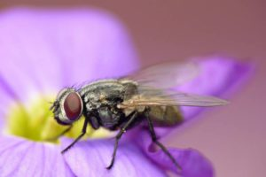 Getting rid of flies in house plants naturally