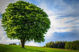 How long does it take for trees to grow