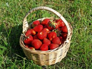 How to Grow Large Strawberries