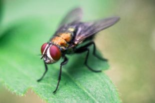 How to get rid of flies in house plants naturally
