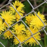 What To Plant Along Fence Line? - Best Gardening Ideas