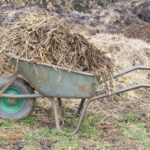 When To Put Manure On Garden - Full Guide