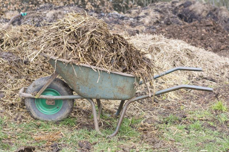 When to put Manure on Garden