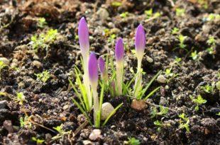 Adding Mycorrhizae to Soil