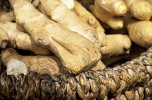 How to Grow a Ton of Ginger