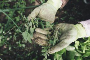 How to Prevent Weeds in the Vegetable Garden