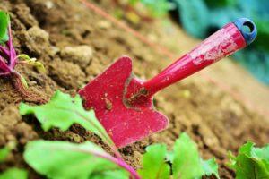 How to add Mycorrhizae to Soil