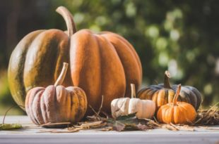 How to keep pumpkins from rotting with vinegar