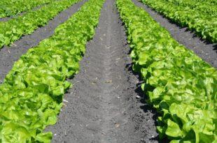 How to make a garden row
