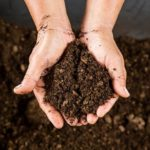 How To Make Peat Moss - Guide