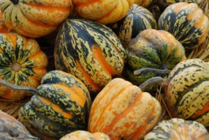 How to tell if acorn squash has gone bad