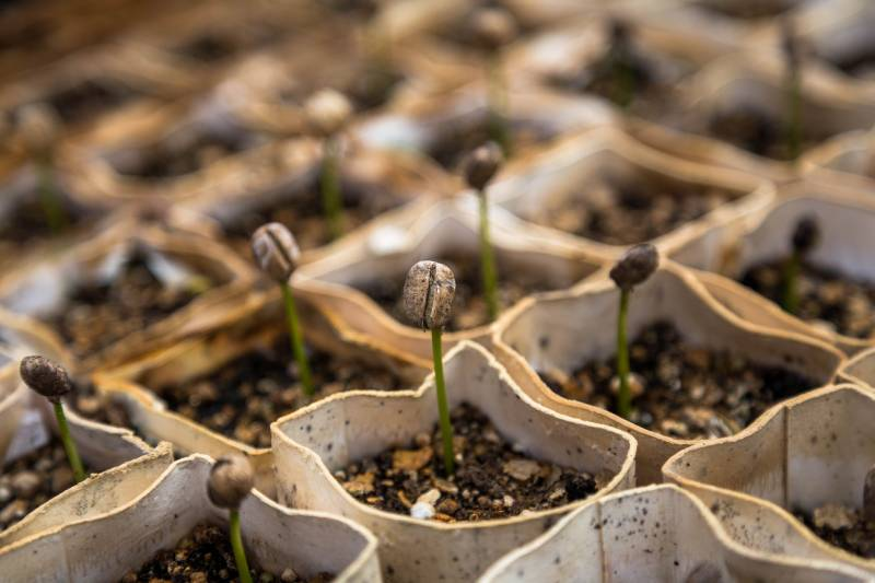 Seedlings Dying After Sprouting
