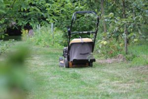 What Happens when you Put Gas in Oil Tank of Lawn Mower?
