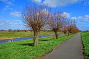 Where Do Willow Trees Grow Around The World