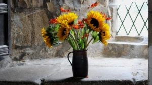 Why my sunflower doesn't stand up in a vase
