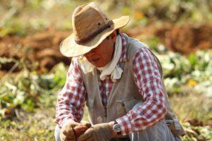 Growing Sweet Potatoes from Scraps
