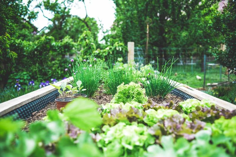 How to Speed Up Veg Growth