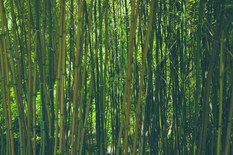Places Where Does Bamboo Grow