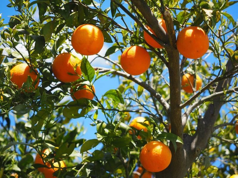 how to make potting soil for citrus trees