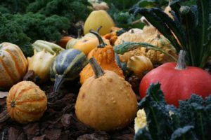 Things to do with ornamental gourds