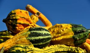What can you do with ornamental gourds